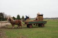 unsere lieben Pferde warten geduldig